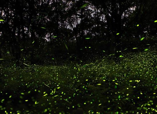 Река светлячков